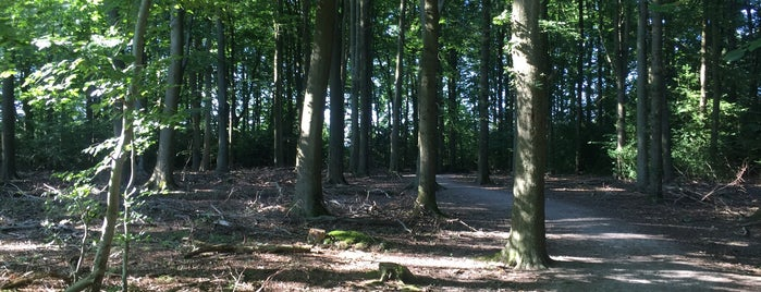 Tilgate Forest is one of Lugares favoritos de Chris.