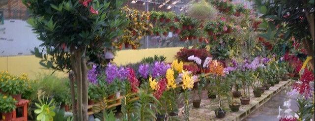 Far East Flora is one of สถานที่ที่ Riann ถูกใจ.