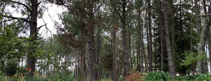 El Vergel is one of Locais curtidos por Pax.
