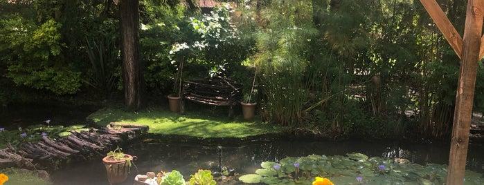 Hotel Canto de Aves Malinalco is one of Posti che sono piaciuti a Liliana.