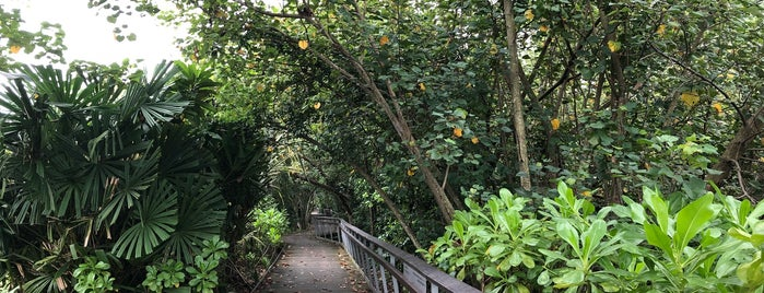 Berlayer Creek (Mangrove Trail Boardwalk) is one of Locais salvos de Ben.