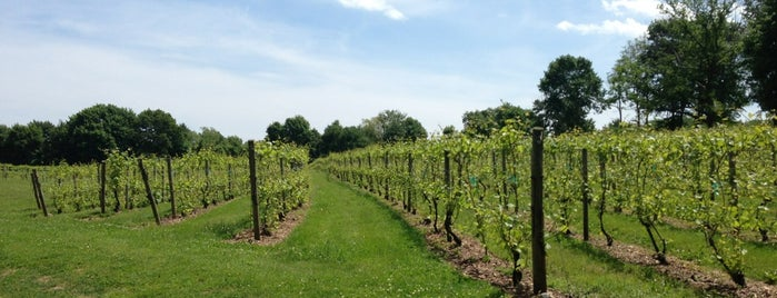 Greenvale Vineyards is one of Things to do nearby NH, VT, ME, MA, RI, CT.