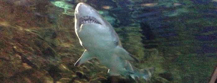 Shark Encounter is one of 🇺🇸 San Diego.