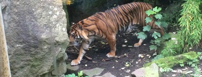 Edinburgh Zoo is one of Lef 님이 좋아한 장소.