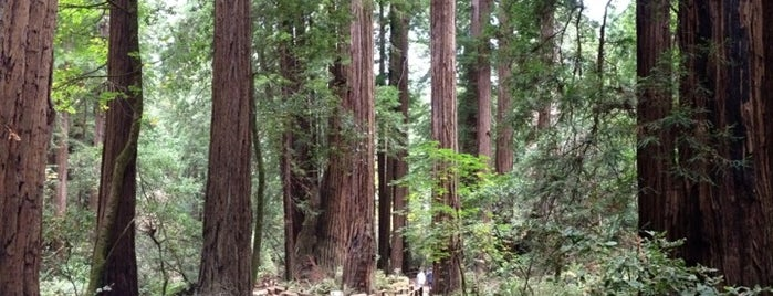 Muir Woods National Monument is one of National Recreation Areas.