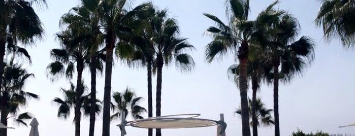 Nikki Beach Marbella is one of Marbella.