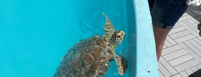 The Turtle Hospital is one of Keys Activities.