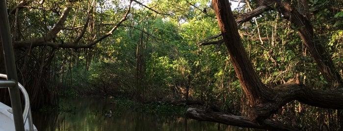 Reserva de la Biosfera Pantanos de Centla is one of Locais curtidos por Joaquin.