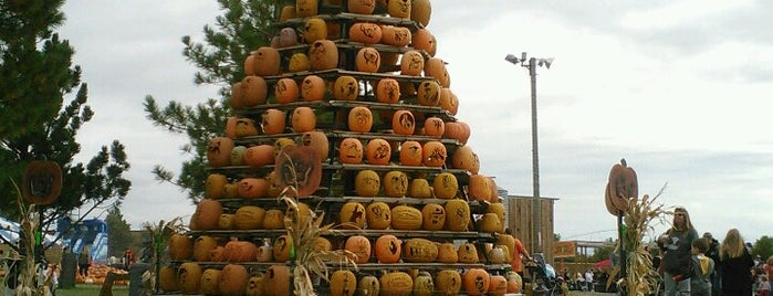 Cornbelly's Corn Maze & Pumpkin Fest is one of Things To Do Post Covid.