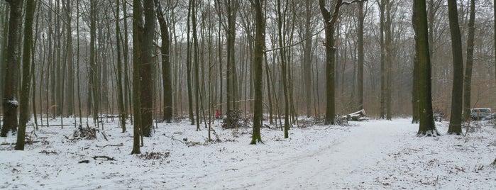 Volksdorfer Wald is one of Posti che sono piaciuti a Travelcheats.