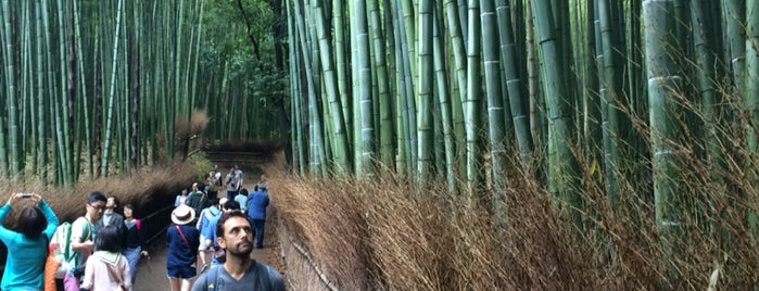 Arashiyama Bamboo Grove is one of Kyoto (Our 1 Day Itinerary).