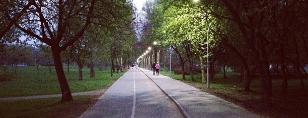 Велодорожка в Муринском парке is one of Lugares favoritos de Katrin😘.