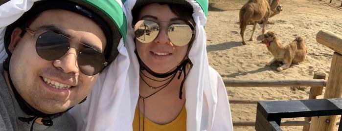 Cactus ATV Tours is one of สถานที่ที่ Ursula ถูกใจ.