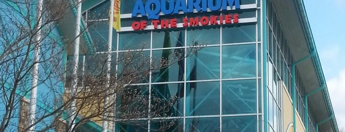 Ripley's Aquarium of the Smokies is one of Jan : понравившиеся места.
