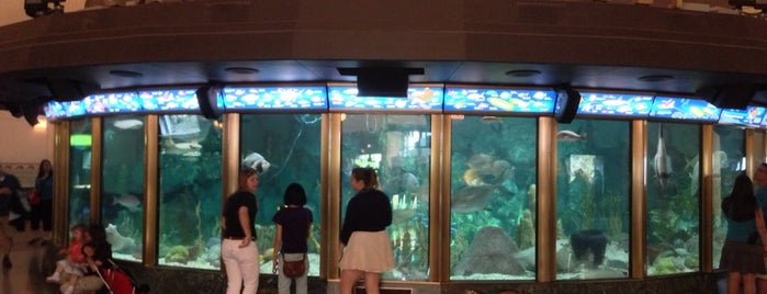 Shedd Aquarium is one of Meet Your Match in CHI: Nature Lovers.