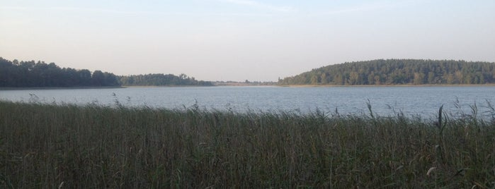 Beobachtungssteg Feisnecksee is one of Müritz National Park.