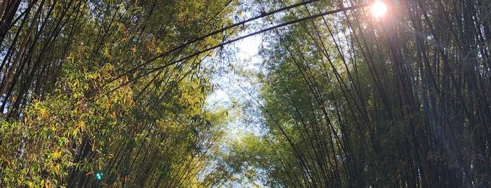 วัดจุฬาภรณ์วนาราม is one of สระบุรี, นครนายก, ปราจีนบุรี, สระแก้ว.