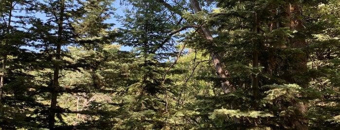 Heaps Peak Arboretum is one of Winter Fun at Lake Arrowhead.