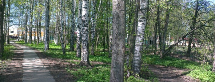 Муринский парк is one of Макс : понравившиеся места.