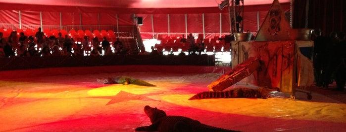 Circo Italiano is one of Biten Organizasyonlar.