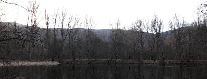 Bosque De Finlandia is one of Rafael's Saved Places.