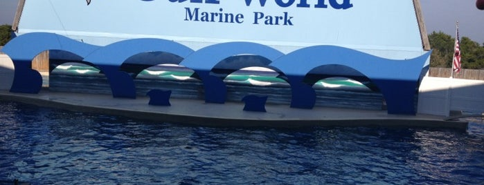 Gulf World Marine Park is one of Things To Do.