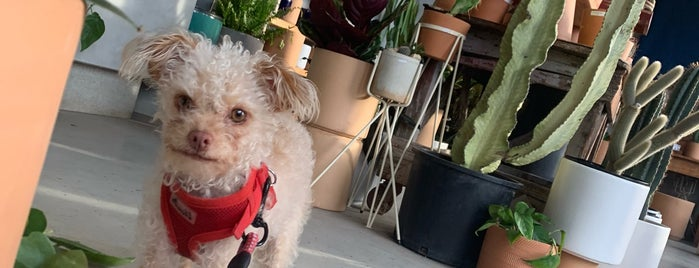 Ponderosa Cactus is one of Posti che sono piaciuti a Mollie.
