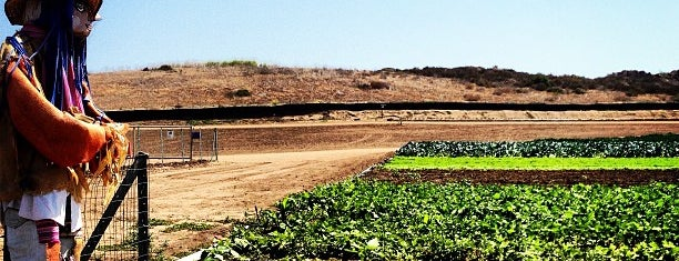 Tanaka Farms is one of California-2.