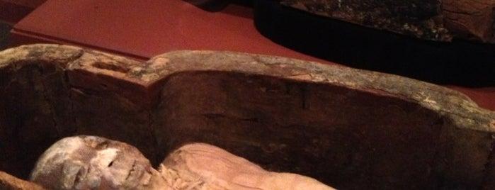 Egyptian Mummies is one of Tempat yang Disukai Rex.