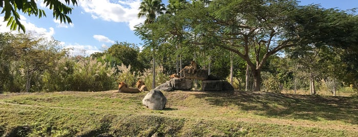 Zoo Miami - Lions is one of Lugares favoritos de Jennifer.