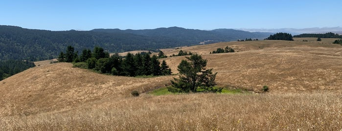 Samuel P. Taylor State Park is one of SF to-do.