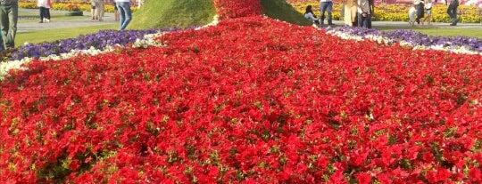 Dubai Miracle Garden is one of Tempat yang Disimpan Najla.