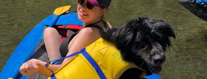 Russian River Adventures is one of Yoda's favorite dog friendly places.
