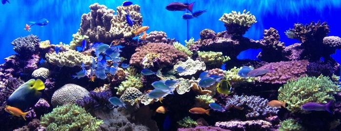 Birch Aquarium is one of Bank of America Free Museum Weekend.