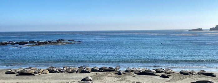 Elephant Seal Rookery is one of Central CA Coast.
