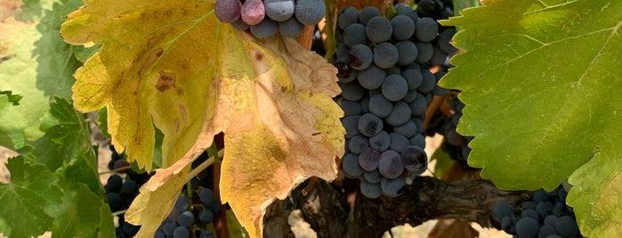 Villa Creek Winery is one of Paso.