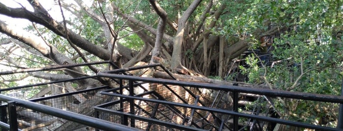 Anping Treehouse is one of Tainan.