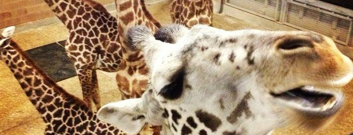 Houston Zoo is one of Houston, TX.