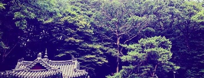 Secret Garden is one of Kimchee.