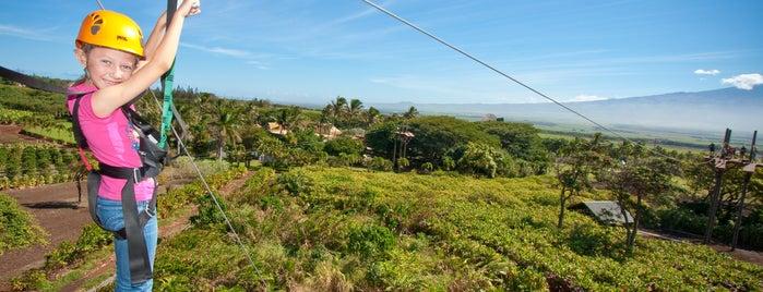 Maui Zipline Company is one of Things to do in Maui.