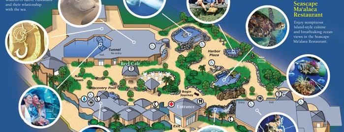 Maui Ocean Center, The Hawaiian Aquarium is one of Things to do in Maui.