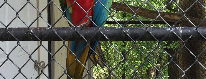 Branson's Promised Land Zoo is one of Lizzie'nin Kaydettiği Mekanlar.