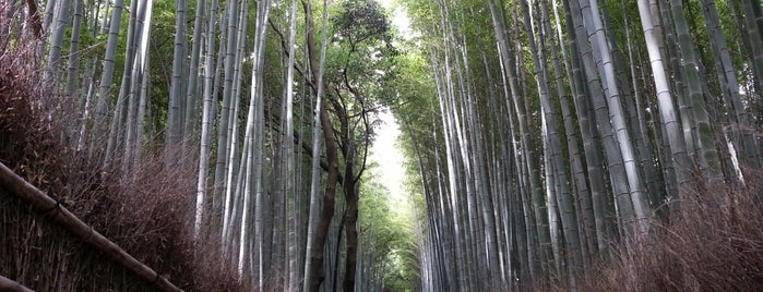 Arashiyama Bamboo Grove is one of nikkinihon.