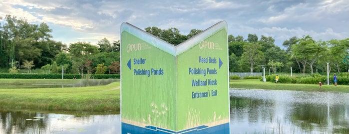 Lorong Halus Wetland is one of Singapore 2019.