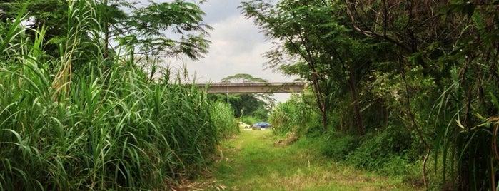 Former KTM Railway Tracks @ Bukit Panjang And Jalan Teck Whye is one of The Rail Corridor.