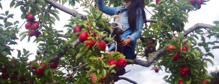 Honey Pot Hill Orchards is one of Excellent Farms for Apple Picking.