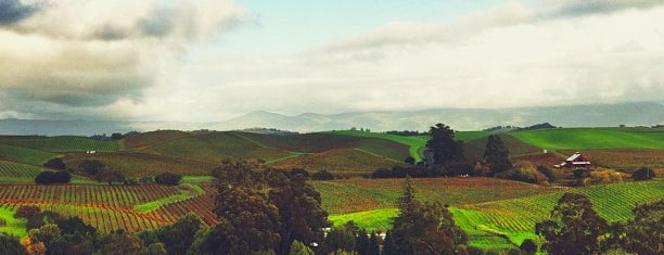 Napa Valley is one of My favoite places in USA.