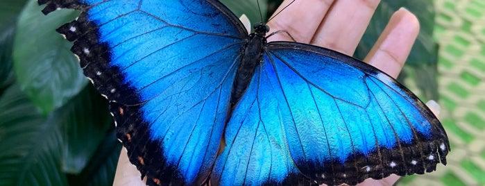 Dubai Butterfly Garden حديقة دبي للفراشات is one of PINAR : понравившиеся места.