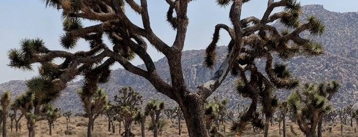 Joshua Tree is one of Most Beautiful US.