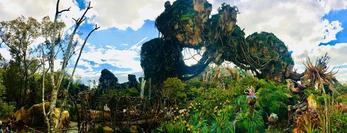 Disney's Animal Kingdom is one of Max 님이 좋아한 장소.